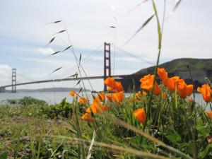 Flowers and the Golden Gate Bridge from the docks